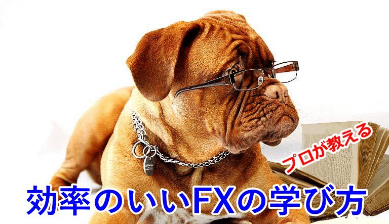 プロが教える!効率のいいFXの勉強方法